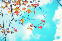 Beautiful autumn leaves and sky background in fall season Stock Photos