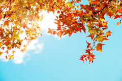 Beautiful autumn leaves and sky background in fall season, Stock Image