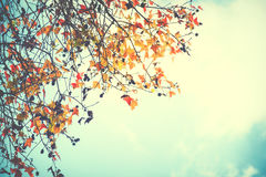 Beautiful autumn leaves and sky background Stock Image