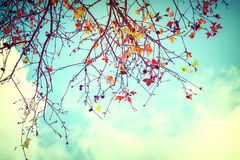 Beautiful autumn leaves and sky background Stock Photography