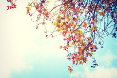 Beautiful autumn leaves and sky background Stock Photo