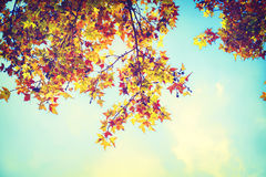 Beautiful autumn leaves and sky background in fall season, Stock Photo