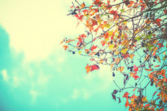 Beautiful autumn leaves and sky background in fall season Royalty Free Stock Photography