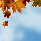 Beautiful autumn leaves and sky stock photos