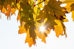 Beautiful Autumn Leaves with Sunlight Shining Stock Photo