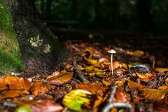 Autumn leaves fall on Forest Fungi in beautiful sunlight Stock Photos