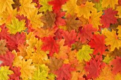 Free Beautiful Autumn Maple Leaves Background. Royalty Free Stock Photography - 123812297