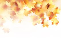 Beautiful autumn with maple leaves. plus EPS10 Royalty Free Stock Photos
