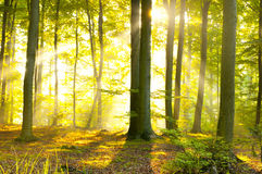 Sunrise in the forest Stock Image