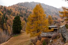 Beautiful autumn landscape with some old chalets in Zermatt area. Beautiful autumn mountain landscape in Swiss Alps, with some old chalets in Zermatt area royalty free stock images