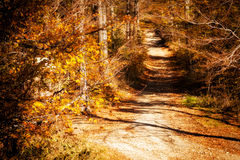 Beautiful autumn mountain woods landscape Stock Photography
