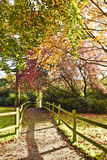 Beautiful autumn nature in Horniman Gardens, London, UK Royalty Free Stock Photography