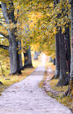 Beautiful autumn nature landscape in yellow park. And a road Stock Image