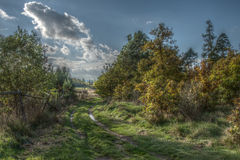 Beautiful autumn nature Royalty Free Stock Photography
