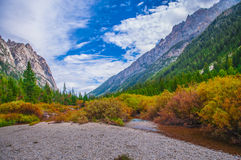 Beautiful Autumn near Cascade Creek - Grand Teton National Park Royalty Free Stock Photos