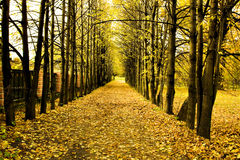 Beautiful autumn park. Yellow beautiful autumnal park in the forest Stock Photos