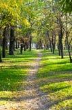 Beautiful autumn park Royalty Free Stock Image