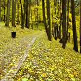 Beautiful autumn park. Wild yellow forest Royalty Free Stock Images
