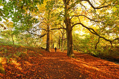 Beautiful Autumn in the park Stock Photography