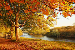 Beautiful Autumn in the park Royalty Free Stock Photos