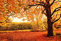 Beautiful Autumn in the park Royalty Free Stock Photo