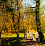 Beautiful autumn park Stock Images
