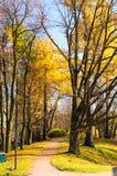 Beautiful autumn park Royalty Free Stock Photo