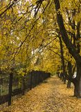 Beautiful autumn park alley. with yellow leaves on the trees Royalty Free Stock Photos