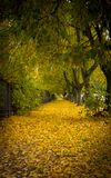 Beautiful autumn park alley. with yellow leaves on the trees Royalty Free Stock Photography