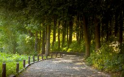 Beautiful autumn park alley. with yellow leaves on the trees. Background Royalty Free Stock Images