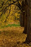 Beautiful autumn park alley. with yellow leaves on the trees Royalty Free Stock Image