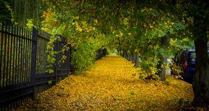 Beautiful autumn park alley. with yellow leaves on the trees Stock Photography