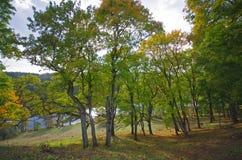 Free Beautiful Autumn Park And Asveja Lake In  Asveja Regional Park  Stock Images - 65243394