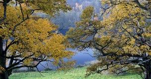 Beautiful autumn park Stock Photos