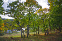 Beautiful autumn park and Asveja lake in 'Asveja Regional Park' Stock Images