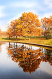 Beautiful autumn park. Autumn in Minsk. Autumn trees and leaves. Autumn Landscape.Park in Autumn. Mirror reflection of trees in wa Stock Photos