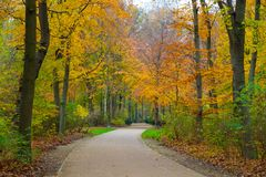 Beautiful autumn park Stock Images