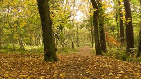 Beautiful Autumn in the park, Coatbridge, Scotland. Beautiful Autumn in the park in Coatbridge, Scotland stock video