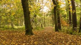 Beautiful Autumn in the park, Coatbridge, Scotland stock video
