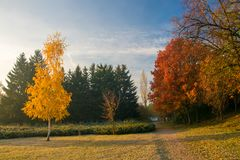 Beautiful autumn park with colorful red and yellow trees. Autumn nature landscape stock photos