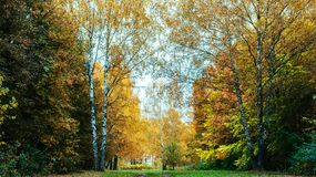 Beautiful autumn park. Foliage on green grass. Autumn day in the forest. Green bright background. Stock Photography