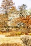 Beautiful autumn park. Golden foliage. Gorgeous landscape. Vertical stock photos