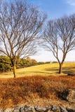Beautiful autumn park. Gorgeous colorful landscape. Vertical royalty free stock image