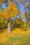 Beautiful autumn in the park Royalty Free Stock Photography