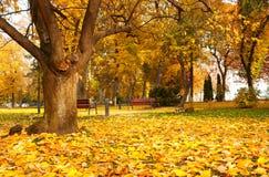Beautiful autumn park at Lake Balaton Royalty Free Stock Image