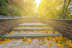 Beautiful autumn in park Royalty Free Stock Image