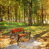 Beautiful autumn park with paths and benches. Bright yellow leaves and a bench illumination by solar beams Stock Photos