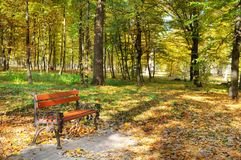 Beautiful autumn park with paths and benches. Royalty Free Stock Photo