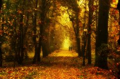Beautiful autumn park. With red leaves stock photo