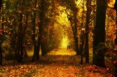 Beautiful autumn park Stock Photo